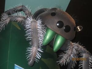 Spider! :)